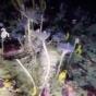Пртрясающие кадры новых форм жизни Антарктики, снятые подводным роботом  (ФОТО)