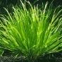 Постоянная ссылка: средства защиты растений.  Все отзывы к этой записи.