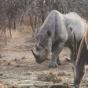 Путешествие в королевство Эсватини (Свазиленд) (ФОТО)