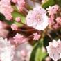 Цветок-Катапульта, мастер необычного опыления (ФОТО)