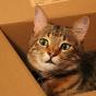 Ученые обнаружили укошек любовь квоображаемым коробкам