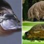 Самые удивительные животные с уникальными способностями (ФОТО)