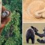 Победители фотоконкурса National Geographic Nature Photographer — 2016 (ФОТО)