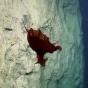 Необычного глубоководного осьминога сняли на видео (ФОТО)