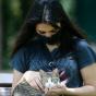 Вирусолог прокомментировал первое вРоссии заражение кошки коронавирусом