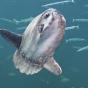 Рыбаки у берегов Африки поймали рекордную рыбу весом две тонны