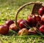 Как выбрать вкусные яблоки: полезные советы