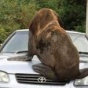 Неожиданный пришелец из океана оседлал автомобиль австралийца (ФОТО)