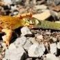 Лягушка пытается сбежать из пасти змеи (ФОТО)