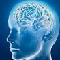 Обнаружен источник сознания человека