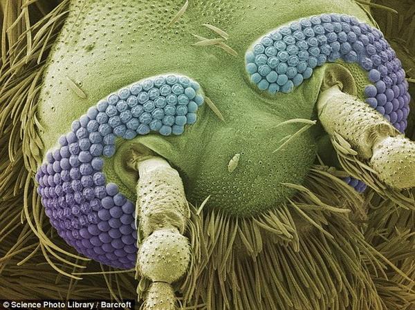 макро фото сперма