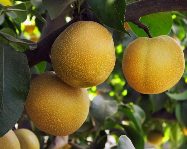 энергетическая ценность фруктов