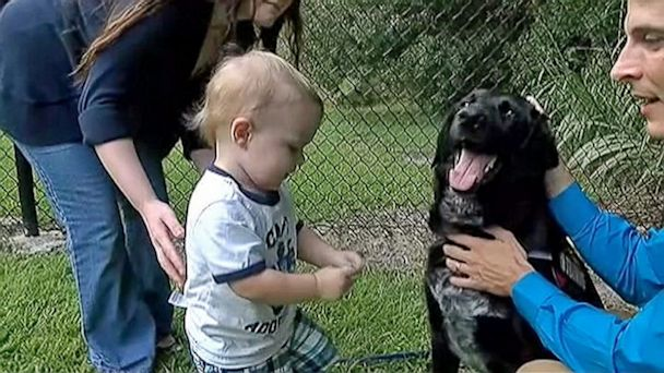 ht_baby_sitter_abuse_dog_ll_130912_16x9_608