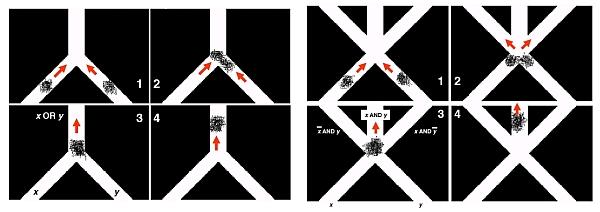 Логический вентиль ИЛИ на «крабьей элементной базе» срабатывал в 100% случаев, а вот И был не столь хорош — иногда две группы крабов сливались и выбирали случайный проход. (Здесь и ниже изображения Kobe University.)