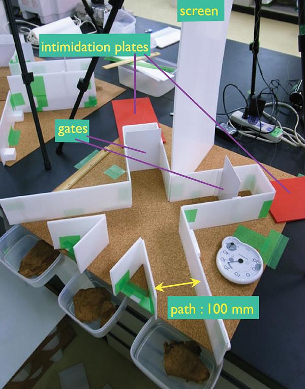 Размер экспериментальной установки невелик, однако она позволяла моделировать более одного логического вентиля. «Тень птицы» создаётся маленькой пластиковой пластинкой.